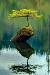 arbre sur morceau bois